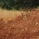 avatar Flavien DELRIEU